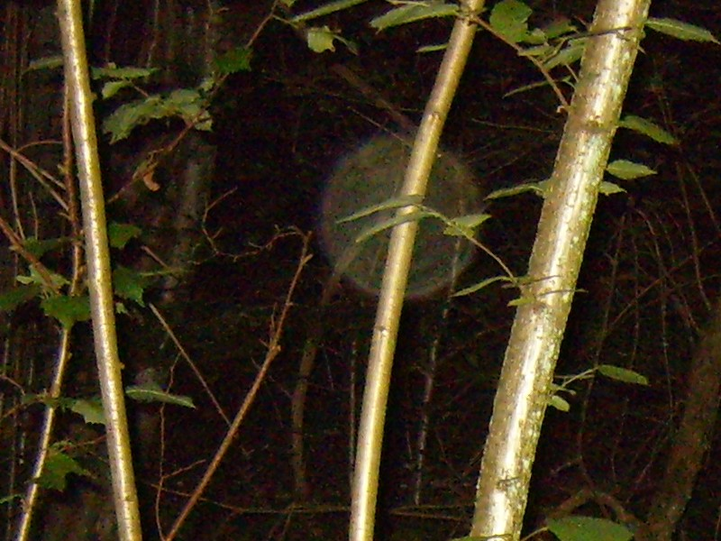 Bicknor Woods ghost hunt - Click to enlarge