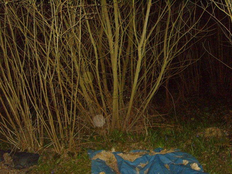 Wychling Woods light anomalies