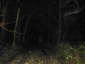 Strange lights and mists on the path
