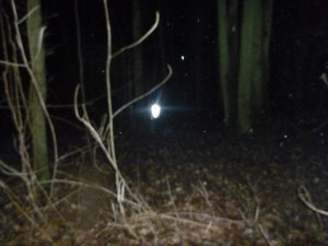 Pluckley Woods light anomaly